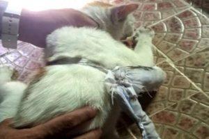قط يستخدم في تهريب المخدرات بسجون بنما