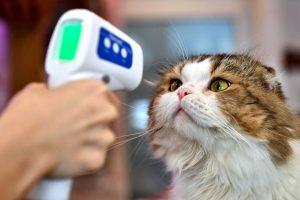 روسيا تبدأ بتطعيم الحيوانات الأليفة ضد كورونا