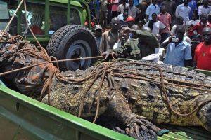 """القبض على """"أسامة"""".. القاتل الأشد فتكاً في أوغندا"""