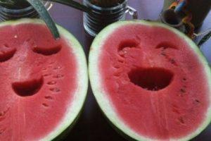 """""""بطيختي"""".. تطبيق جديد بين المزح والجد لكشف البطيخ الناضج عبر """"الطبطبة"""""""