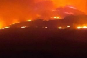 The Forest Platform warns of a severe spread of fires in Syria